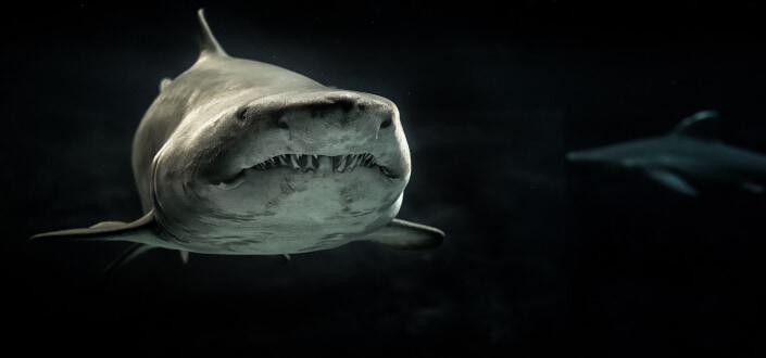 Corny dad jokes-corny shark dad jokes