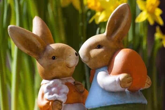Corny dad jokes-rabbit