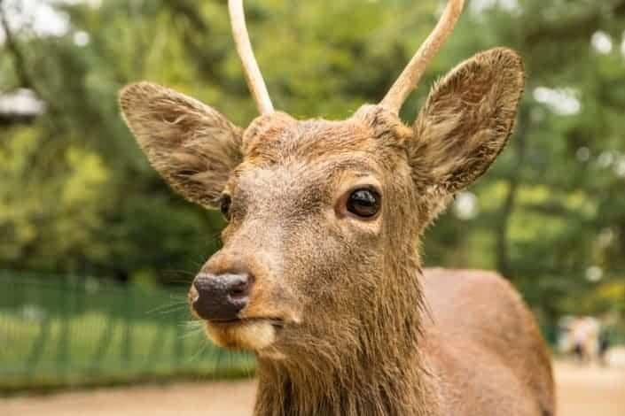 What do you call a ghostly reindeer? Cari-boo!.jpg