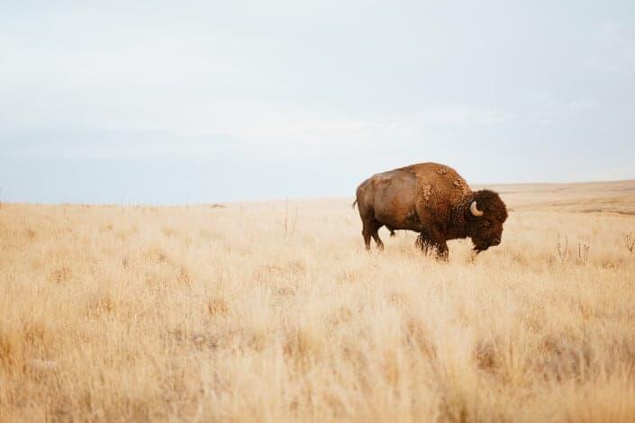 corny dad jokes-buffalo