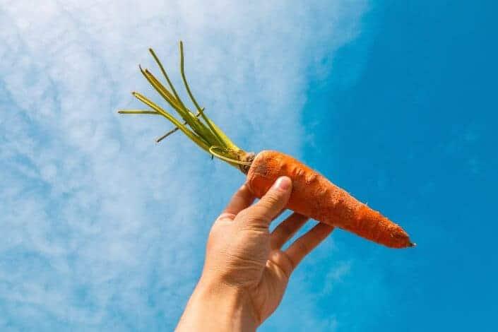 corny dad jokes-carrot